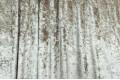 Бархат для штор мраморный, цвет белое золото, 300 см, Китай